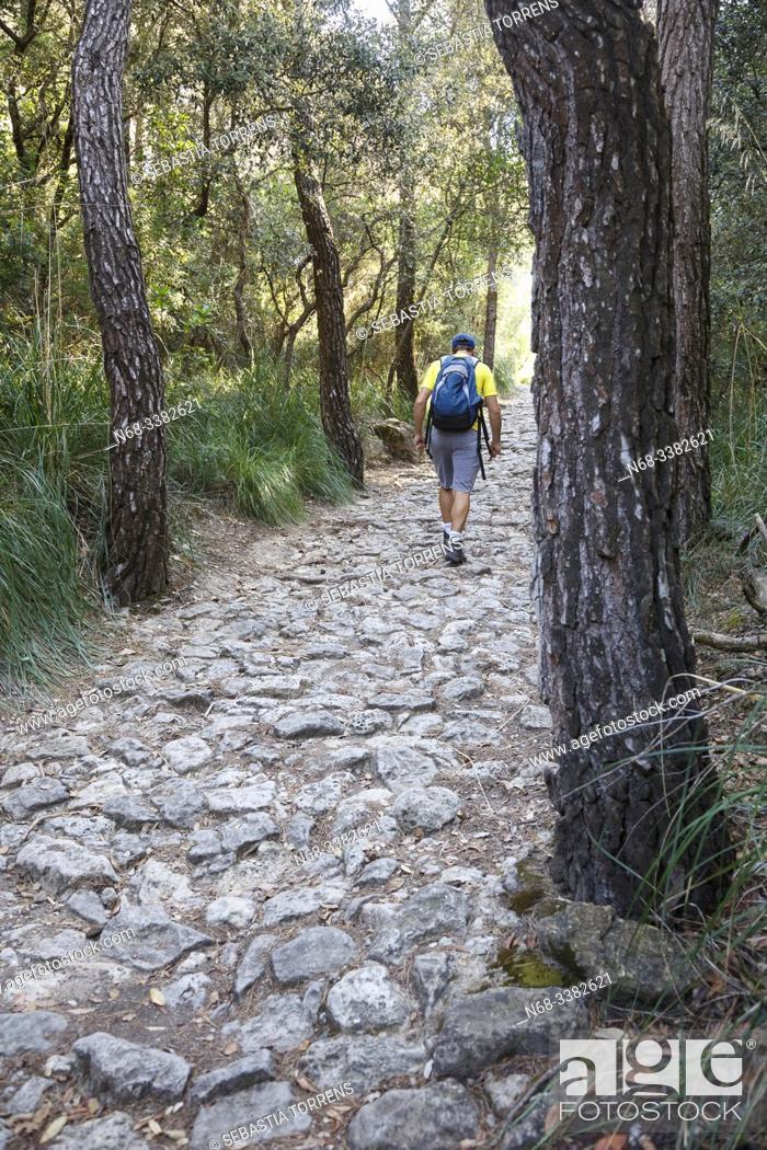 Stock Photo: Hiker in the Cami des Correu, between Banyalbufar and Esporlas, Majorca, Spain.
