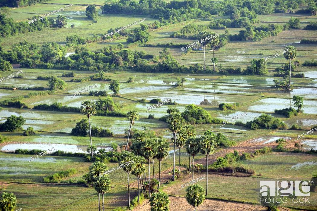 Stock Photo: Cambodia, Siem Reap; around Angkor Vat, Rice-field.
