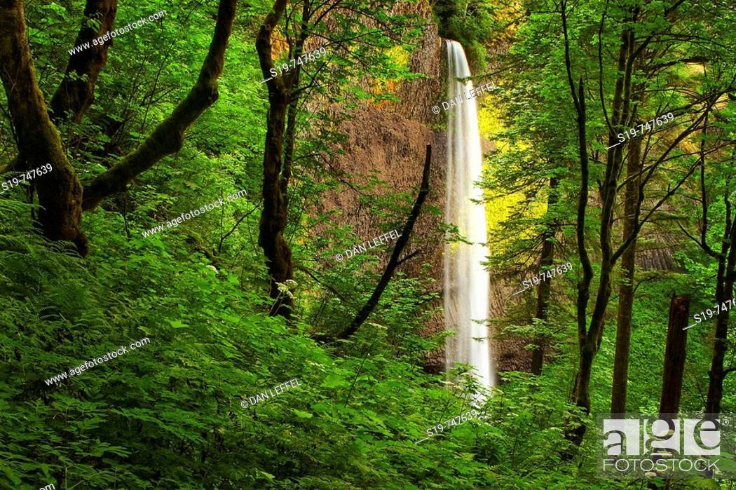 Stock Photo: Waterfall, Columbia River Gorge, Oregon, USA.