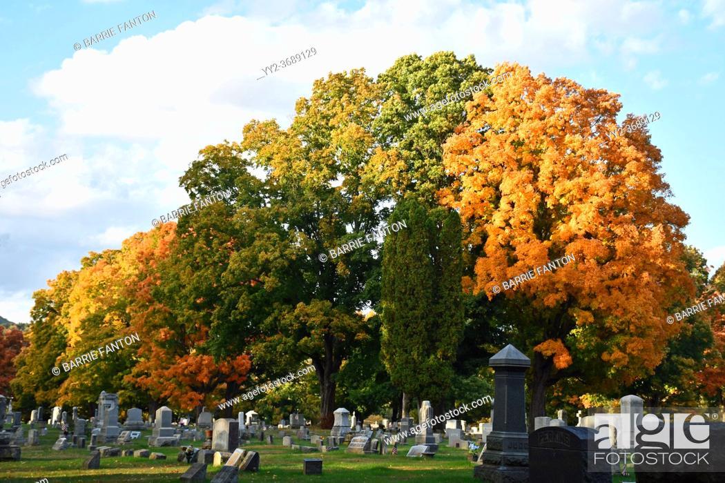 Imagen: Autumn Trees in Cemetery, Wellsville, New York, USA.