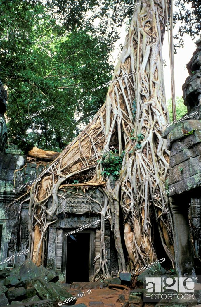 Stock Photo: Roots of a spung running along Ta Prohm temple, Ruins of Angkor, Siem Reap, Cambodia. UNESCO World Heritage Site.