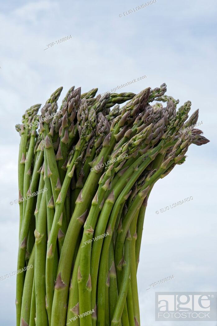 Stock Photo: Green Asparagus.