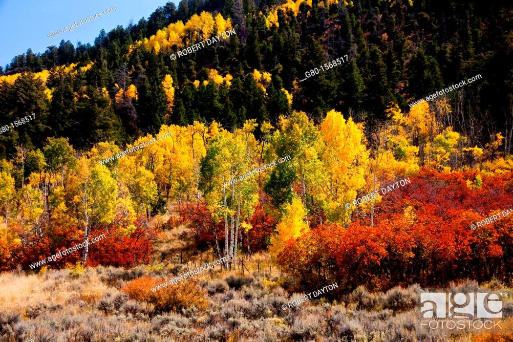 Stock Photo: Fall colors along the Million Dollar Highway in Colorado.