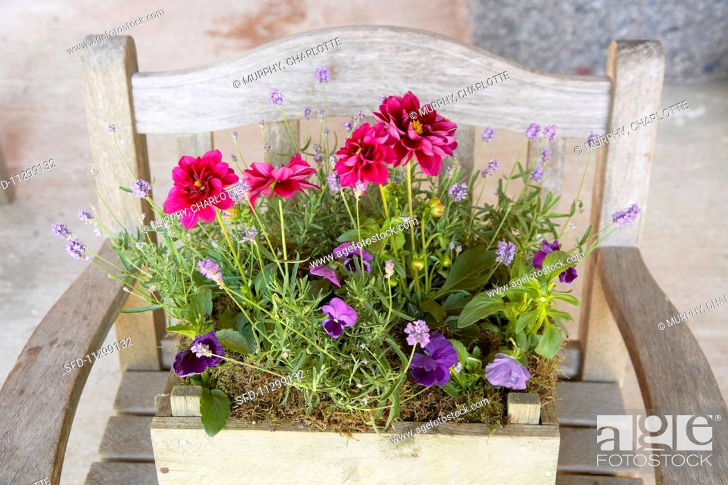 Stock Photo: Various flowers and lavender planted in an old wooden box on a chair.