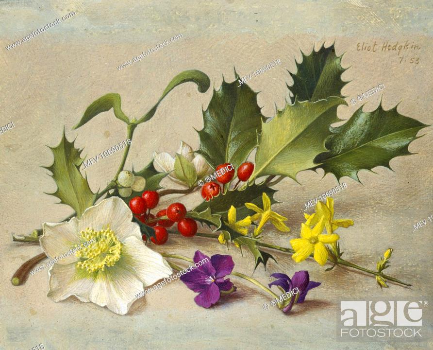Stock Photo: Winter Spray û Holly, Mistletoe, Christmas Roses, Violets and Winter Jessamine.