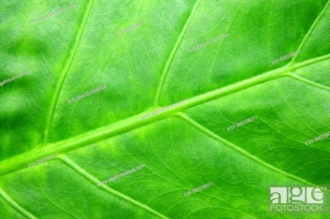 Photo de stock: Green tropical leaf background.