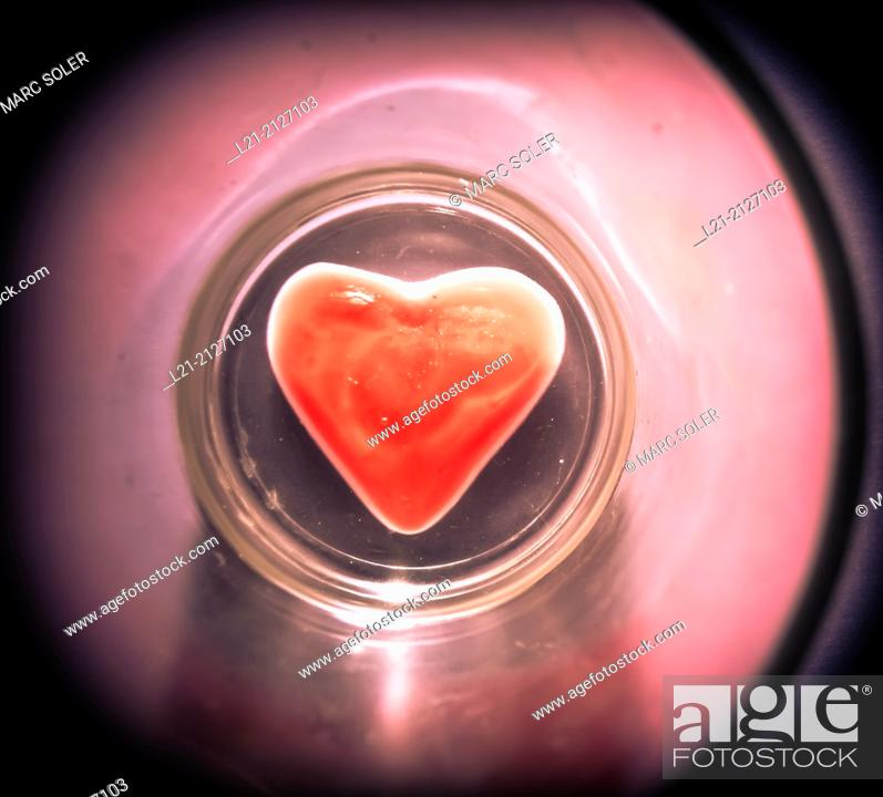 Stock Photo: Red heart.