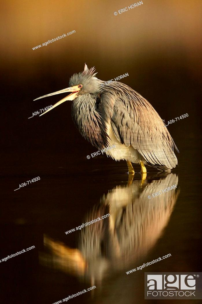 Stock Photo: Heron.