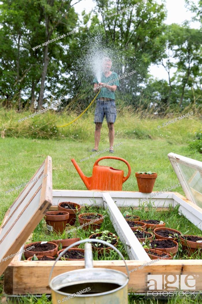 Stock Photo: Man watering plants in garden.