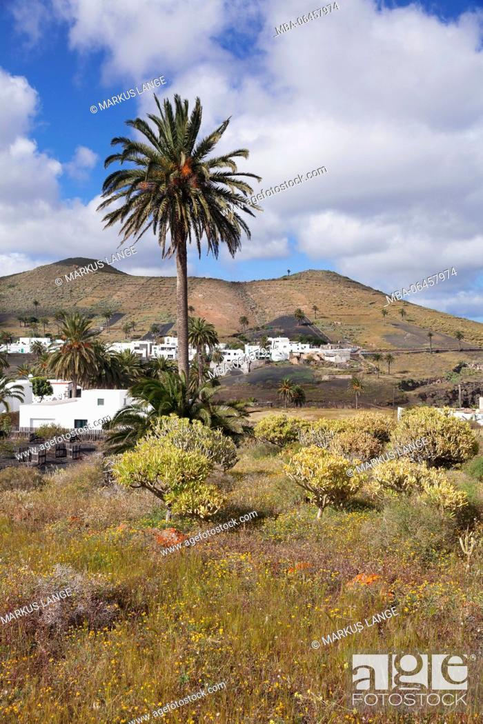Stock Photo: Haria, valley of thousand palms, Lanzarote, Canary islands, Spain.