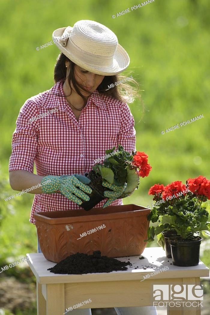 Woman, gardening, geraniums, flower-boxes, plants, 30-40 years, long ...