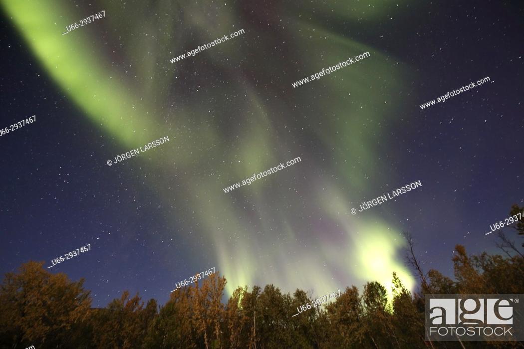 Stock Photo: Aurora borealis Autumn colours in Bjorkliden. Lappland, Sweden.