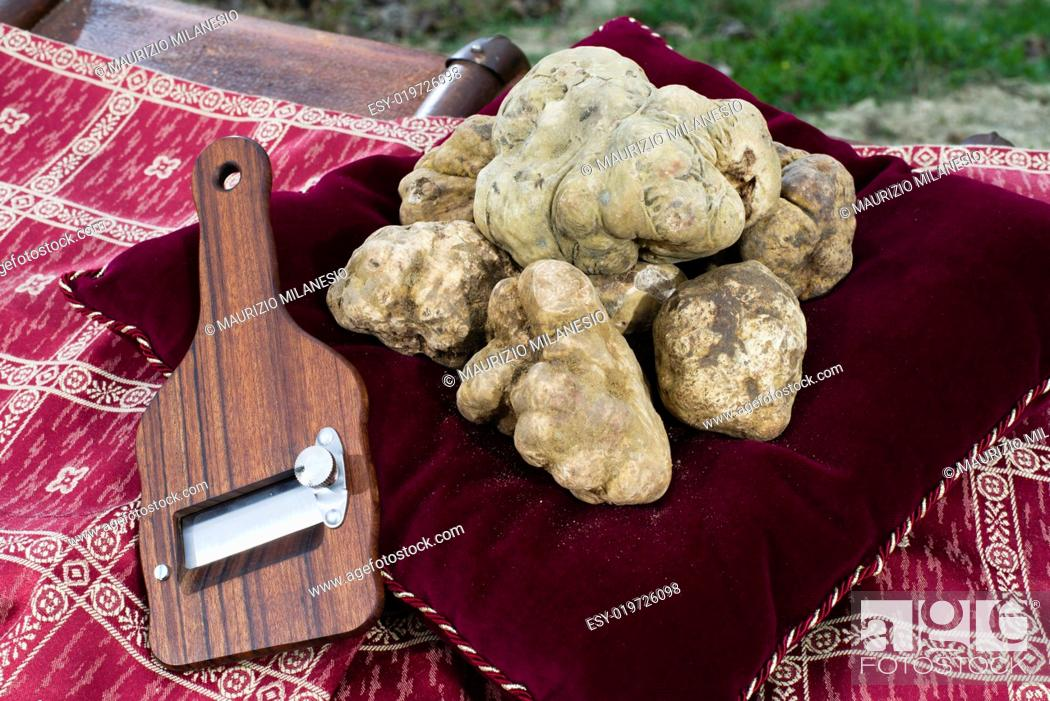 Stock Photo: White Truffles resting on a red pillow with a side truffles slicer.