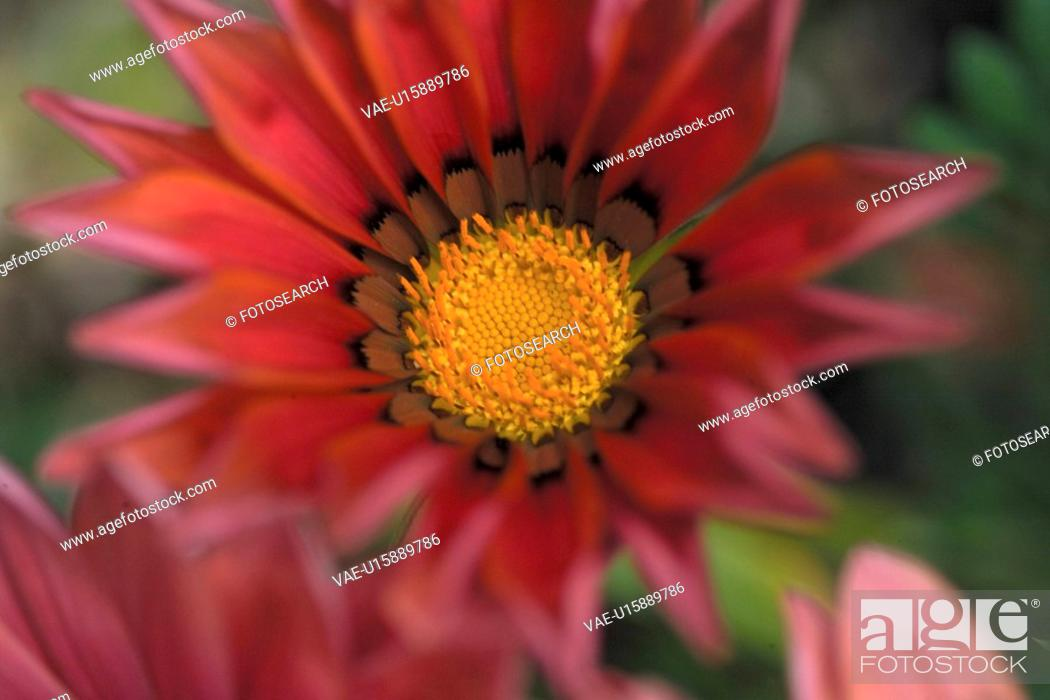 Stock Photo: blossom, plants, bloom, flowers, flower, plant.