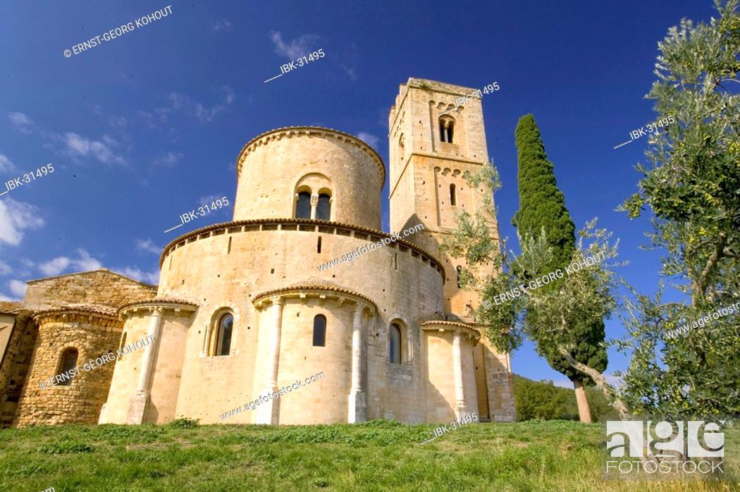 Stock Photo: Olive tree with Abbazia di Sant Antimo in the background.