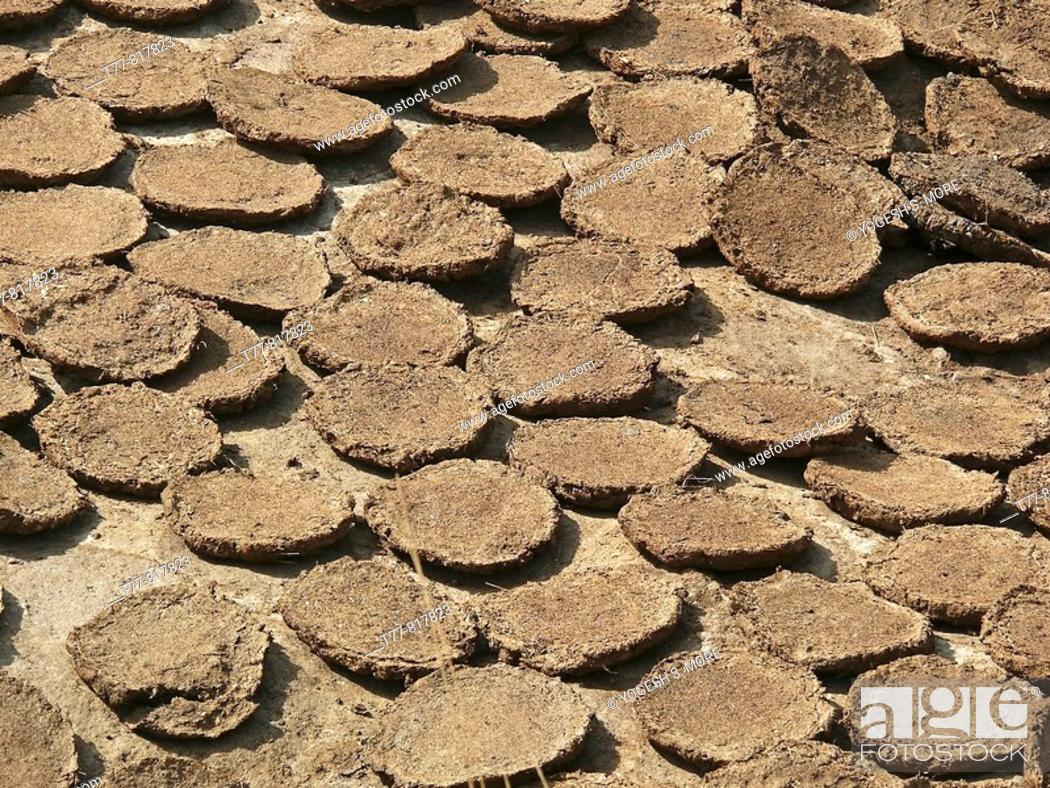 Dried Cow Dung Cakes Piles Of Cow Pates Stacked For Used As Fuel In