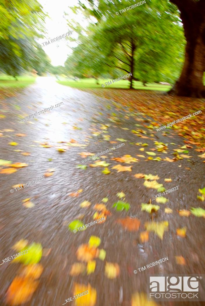 Stock Photo: Low view of path through park in autumn.