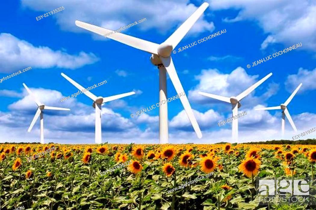 Stock Photo: Windmill in a field of sunflowers.