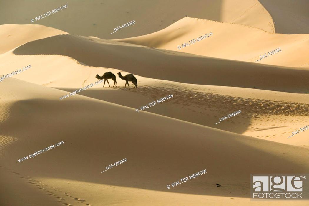 Stock Photo: Camel Caravan on the Erg Chebbi Dunes (up to 400 ft in height). Morning. Merzouga. Tafilalet. Morocco.
