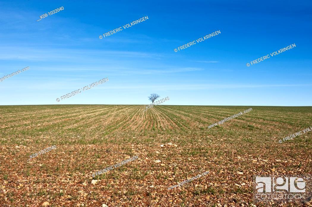 Stock Photo: Farmlands, La Mancha, Spain.