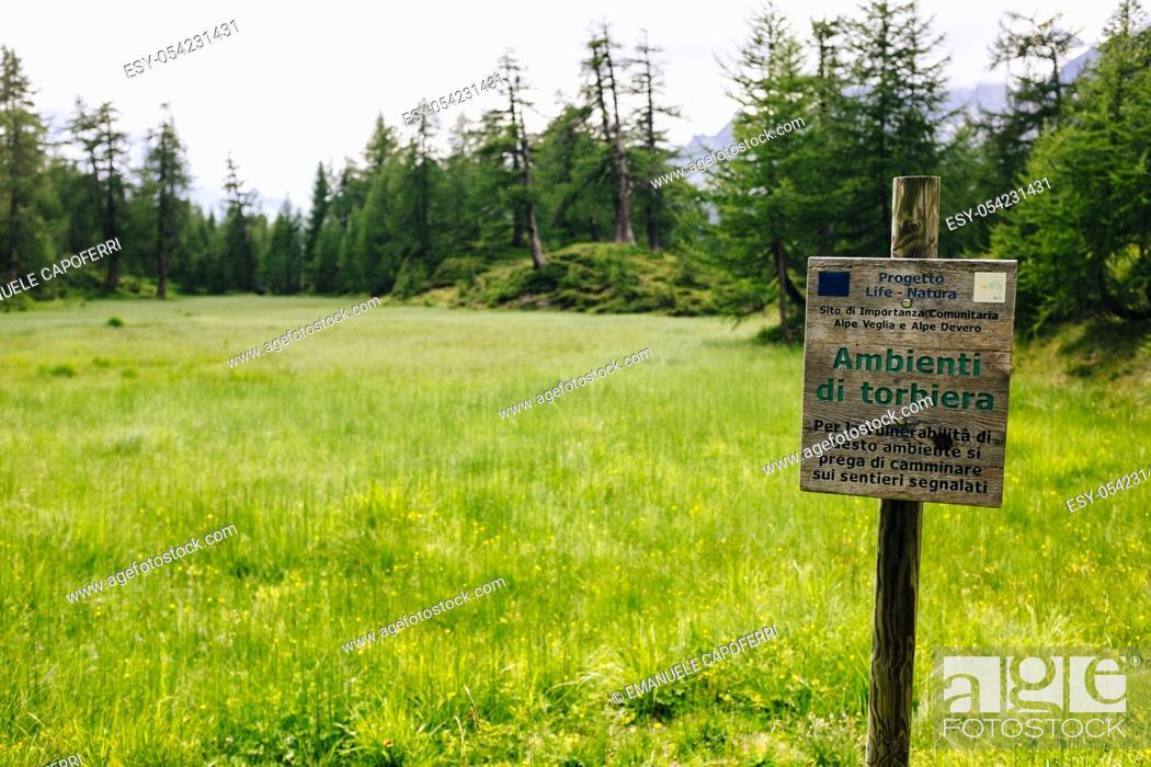Stock Photo: Protected marshland, Alpe Devero, Piemonte, Italy.