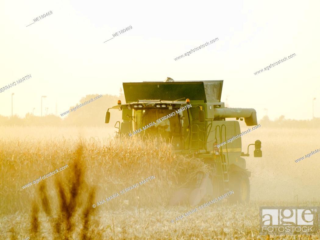 Imagen: A harvesting machine in a field harvesting corn at sunset in autumn in Salamanca (Spain).