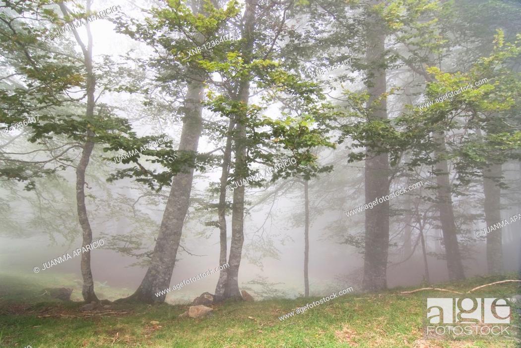 Stock Photo: Irati forest, Navarra, Spain.