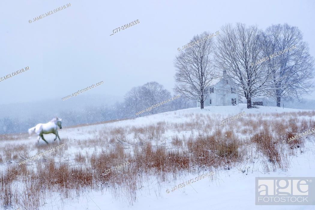Imagen: Horse, Horses, winter, snow, white horse.