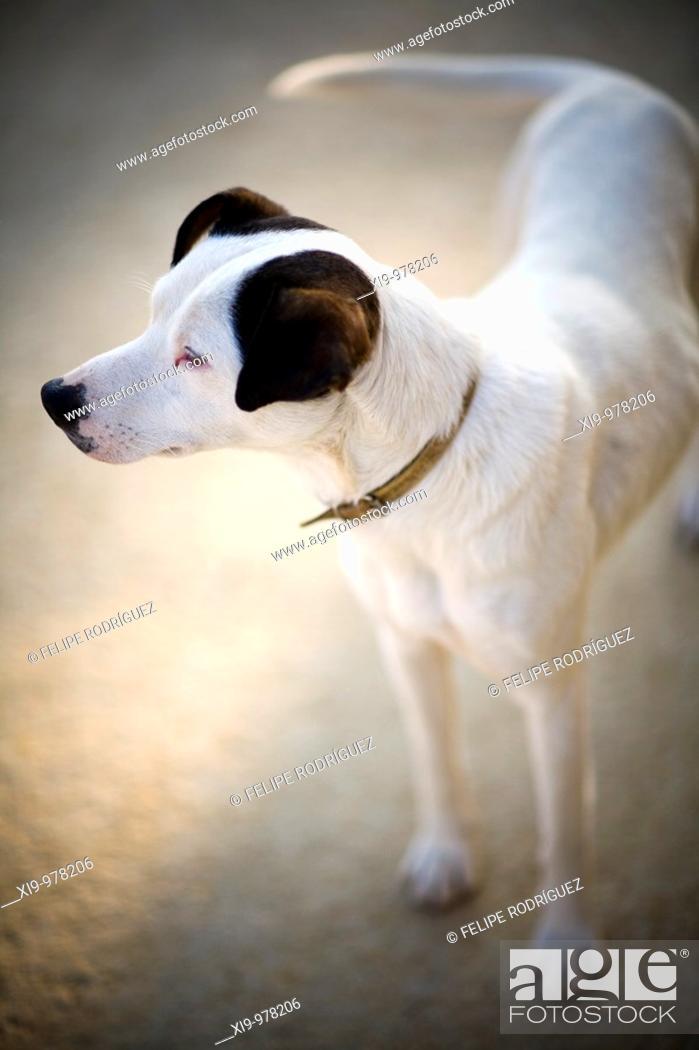 Stock Photo: Stray dog, Seville, Spain.