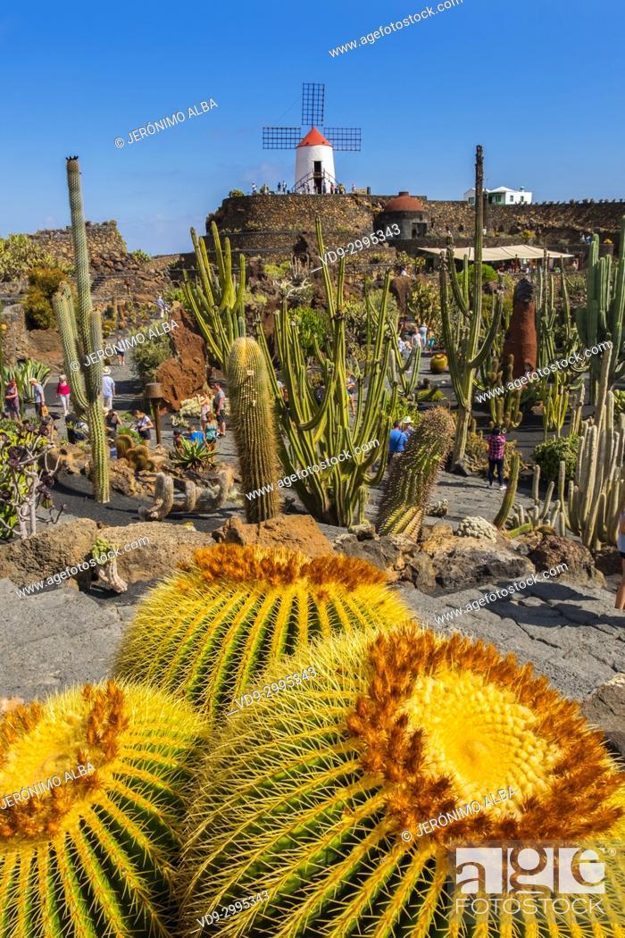 Imagen: Jardin de Cactus. Cactus Garden designed by Cesar Manrique, Risco de las Nieves range, Guatiza. Lanzarote Island. Canary Islands Spain. Europe.