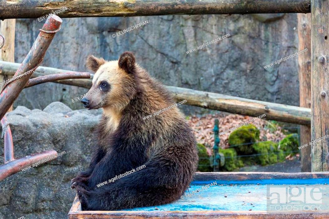 Imagen: Cute Little bear at zoo.