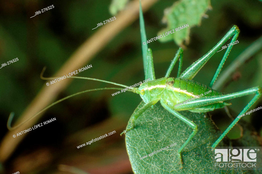 Stock Photo: Cricket.