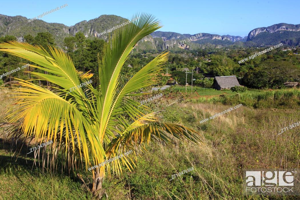 Stock Photo: Cuba, Vinales Valley, Valle de Vinales, mogotes, limestone cliffs, palm tree, .