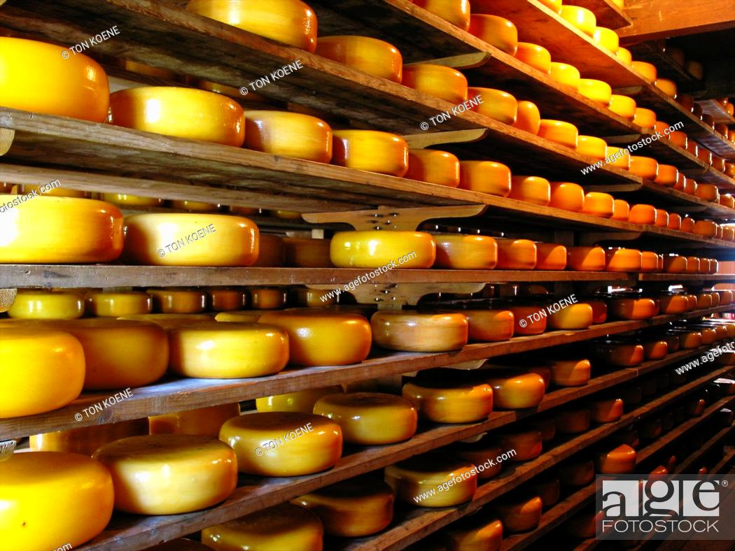 Stock Photo: cheese factory in Holland.