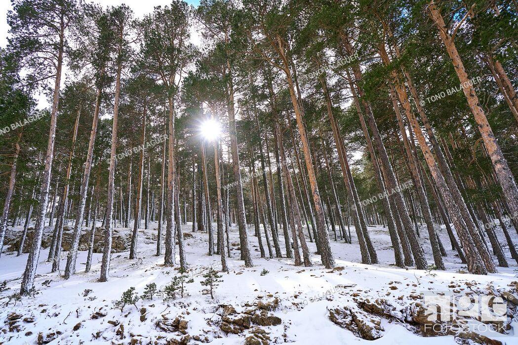 Stock Photo: Valdelinares snow ski area in Teruel at Spain.