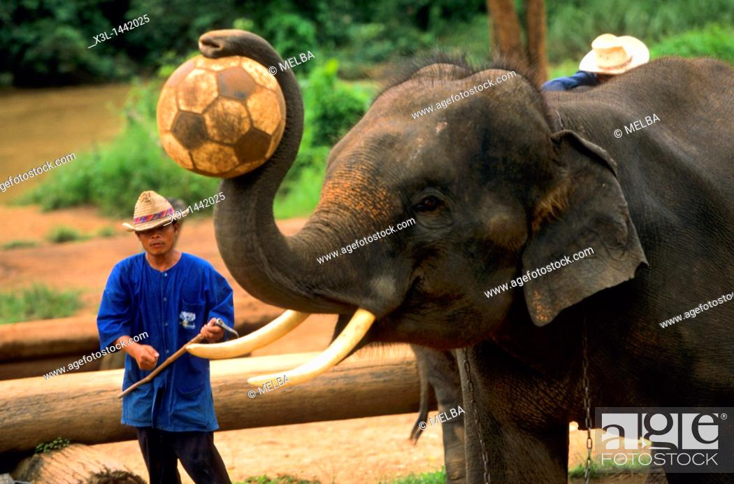 Stock Photo: Elephant show para tourists  Ma Ping  Chiang Mai  Thailand.