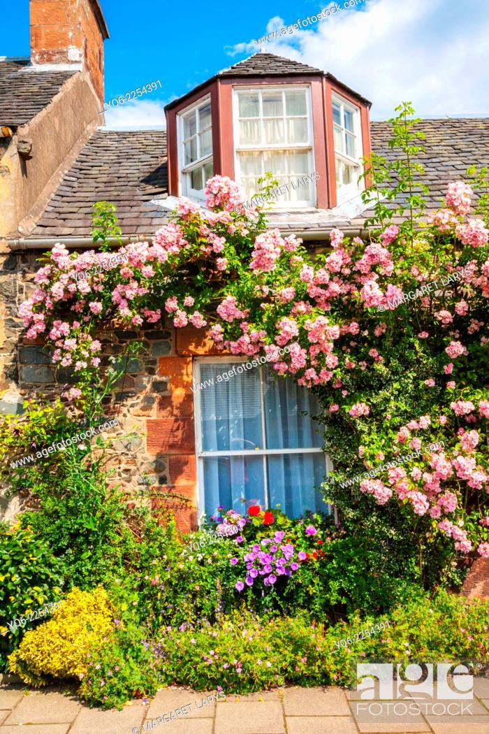 Stock Photo: Beautiful old cottage with climbing roses in Scotland.