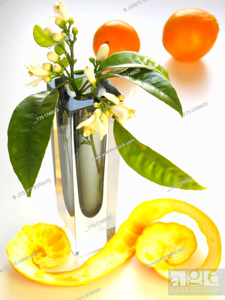 Stock Photo: Spiral of Orange and orange blossom.