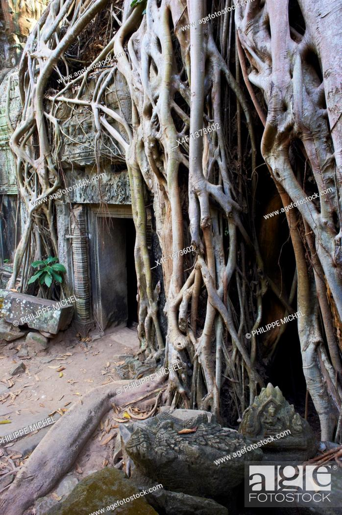 Stock Photo: Southeast Asia, Cambodia, Siem Reap Province, Angkor site, Unesco world heritage since 1992, Ta Prohm temple builded in 1186 by the king Jayavarman VII.