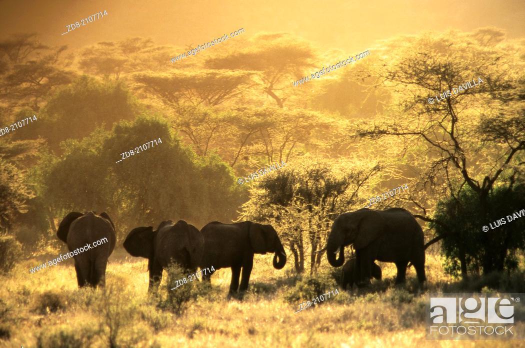 Stock Photo: elephant in samburu national park.kenia.