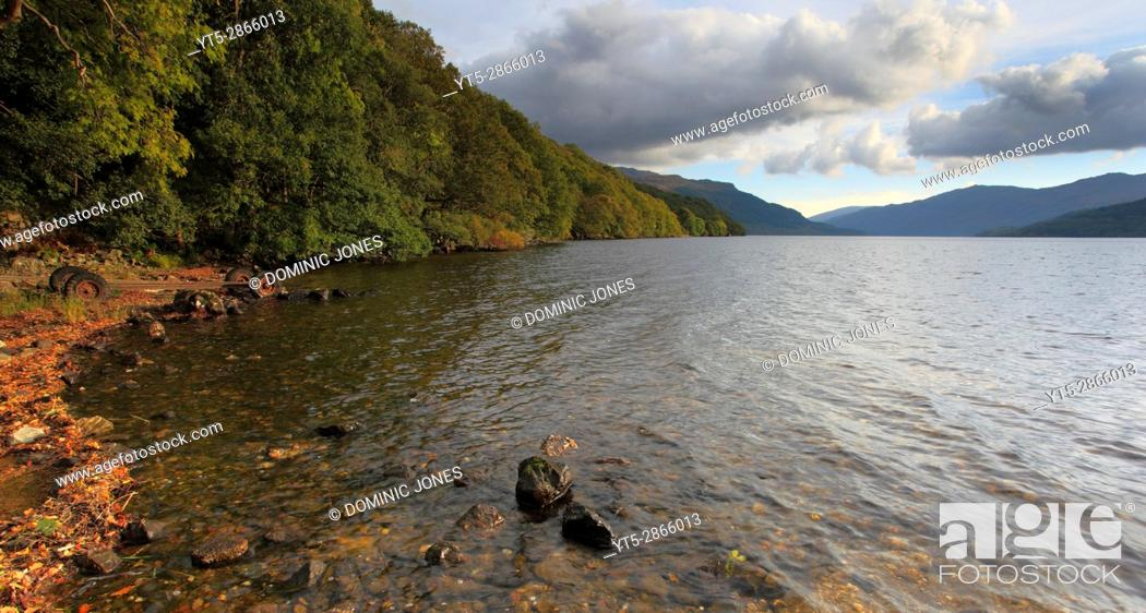 Stock Photo: Woodland on the shore of Loch Lommond, Inversnaid, Trossachs National Park, Scotland, Europe.