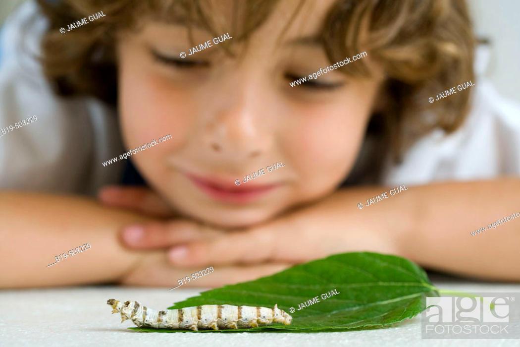 Stock Photo: Boy with silkworm.