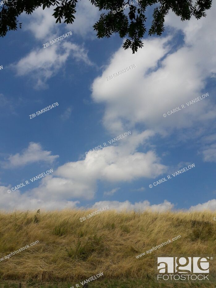 Stock Photo: Horizon with dry grass and clouds in sky. Taken in the Limburg province of the Netherlands.