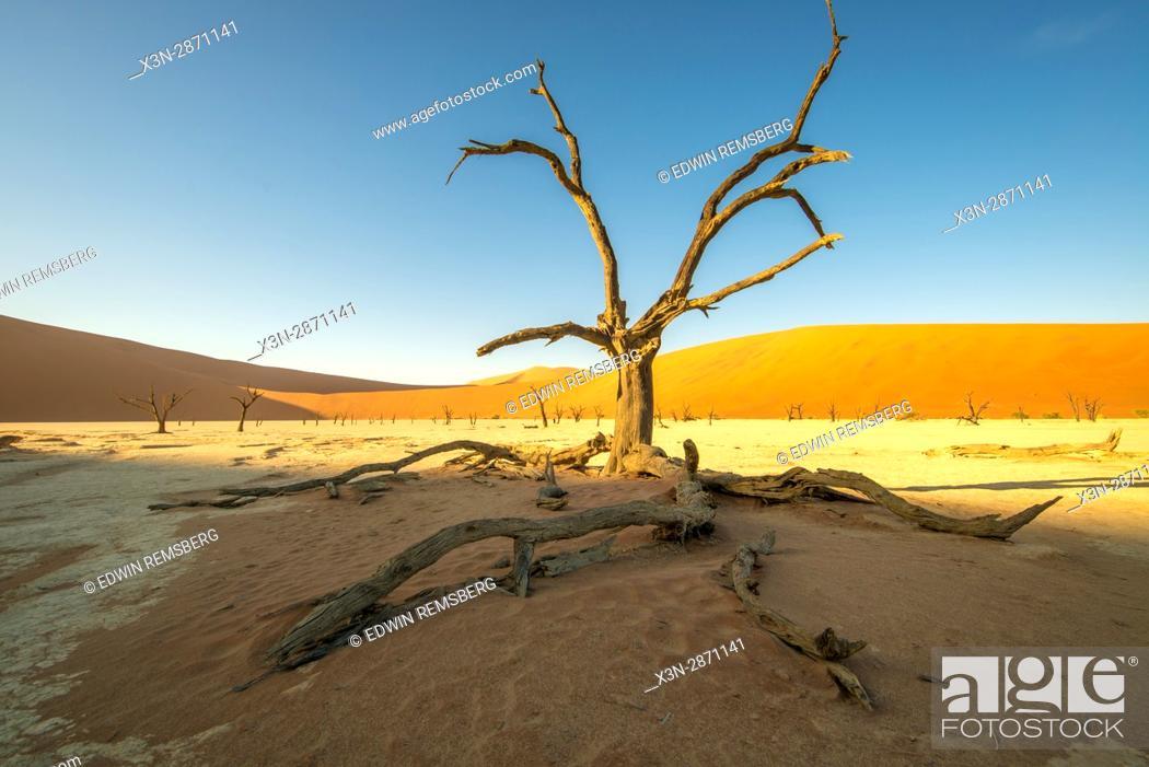 Stock Photo: Dead acacia tree with the sunset in the Namib-Naukluft National Park in Namibia, Africa. Etosha, Namibia.