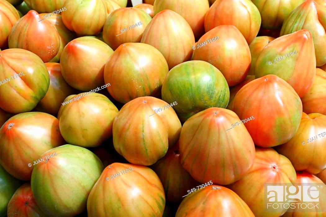 Stock Photo: Tomatoes, Valencia. Comunidad Valenciana, Spain.