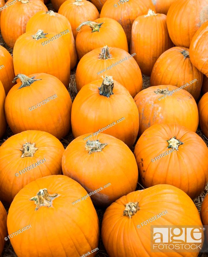 Stock Photo: Group of pumpkins sitting on ground at farmers market.