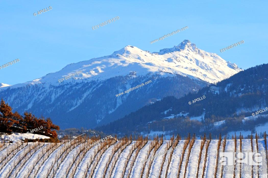 Stock Photo: Vineyard during winter in front of the snow-covered mountains of the Pennine Alps, Valais, Switzerland.