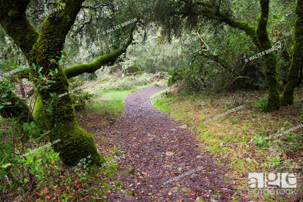 Stock Photo: USA, California, Northern California, Sonoma Wine Country, Glen Ellen, Jack London State Historical Park, former estate of writer Jack London.