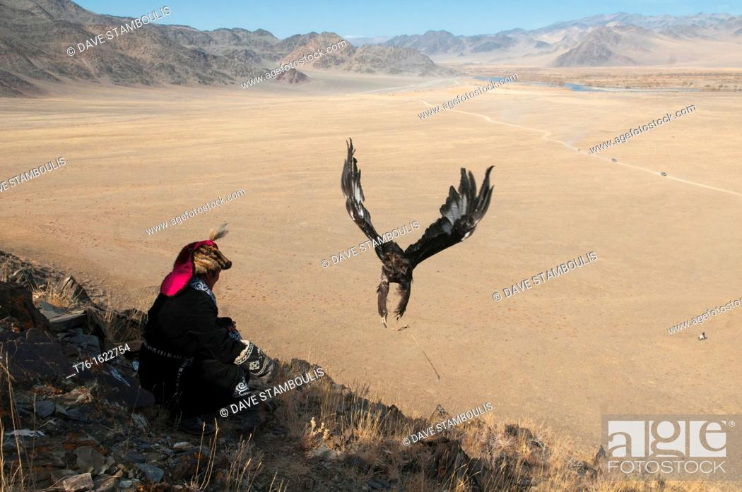 Stock Photo: A Kazakh eagle hunter lets his golden eagle fly in the Altai Region of Bayan-Ölgii in Western Mongolia.