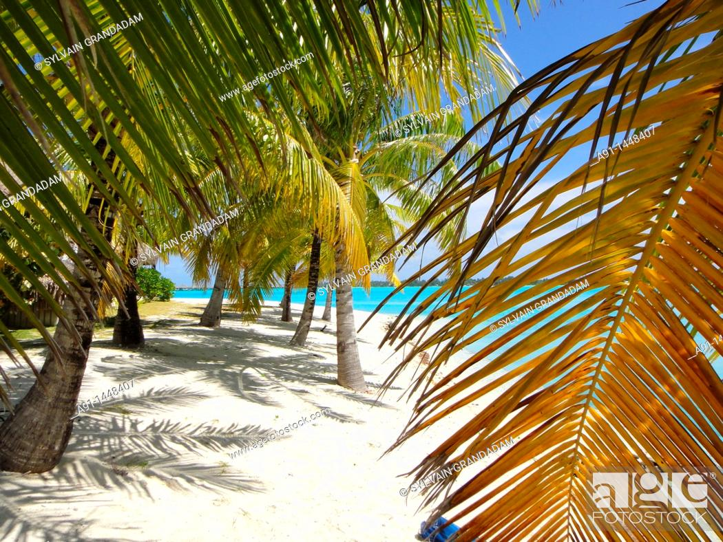 Stock Photo: French Polynesia, Windward islands archipelago, bora bora island.